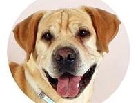 My story Brady's adoption includes his: neuter,