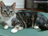 Braelynn is a beautiful torbie girl with an unusual and