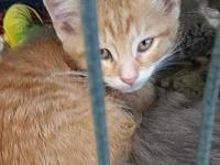 Bram's story Say hello to Bram! Bram was brought in