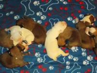 We have 8 brand new CKC (Continental Kennel Club)