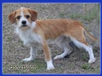 Spring and Brandon were abandoned in a rural area.