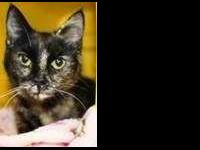 Brandy is a very sweet little cat that loves a nice,