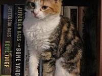 Brandy Female Kitten's story This is Brandi. She is a