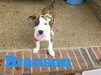 Branson's story Branson is as sweet as pie and just too