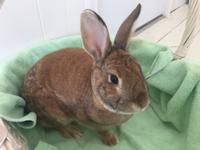 Brant is a very sweet little bunny!  He came to us from