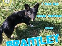 Brantley's story You can fill out an adoption