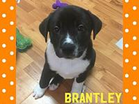 Brantley's story Brantley is 9 weeks old and will be