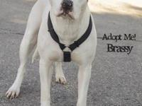 Brassy's story Brassy is the epitome of a gentle dog.