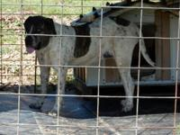 Adult lady, approx 3 years, white and black, undamaged,