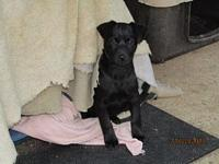BREE's story Thank you, for considering adopting a