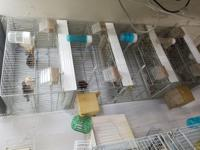 breeder cages available single or stacked good for