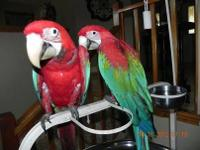 We are selling all of our breeder birds and going to