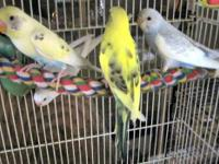 I have 7 baby parakeets that were born and raised in a