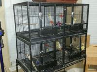 Selling two sets of breeding cockatiels with a quad