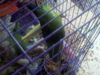 I have a breeding pair of quaker parrots that I am