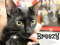 Breezy's story The adoption fee is $85.00 with an