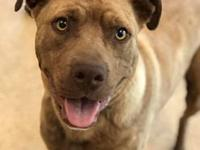 brendon's story Brendon male 2 years pit mix adoption