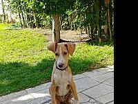 Brewster - Foster Needed!'s story Brewster is a Perro
