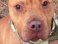 ? BREWSTER (#12899) - Brewster (male) is 3 yrs old,