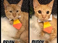 Brian & Buddy's story Meet best buds, Brian and Buddy!