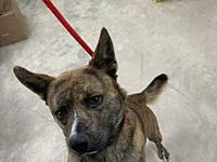 My story BRICK IN NC KENNEL NEEDS A HOME-TRANSPORT IS