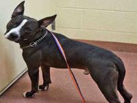 BRIDGER's story Bridger is a 6-year-old, neutered male,