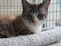 Bridgette's story Gorgeous shy girl that is bonded and