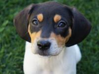 Meet adorable Brie, one of four puppies who came to TRD