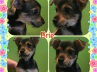 Our latest shelter pull is Brie, all the way from
