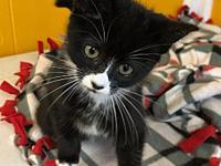 Brigette's story Brigette, Black and white female