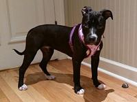 Briley's story I am BRILEY, and I am here to play! I