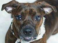 Brindi's story You can fill out an adoption application