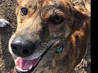 Brindi's story Brindi is a 37 lb mixed breed baby. She