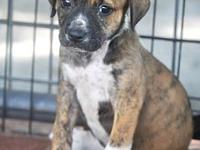 Brindle's story Brindle is 8wks old. She's a precious