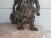 Brindle, dapple, piebald, ohh my!! We have beautiful,