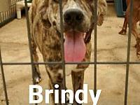 Brindy's story Brindy is a very pretty girl about one