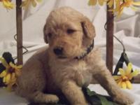 Brinker's my name! I'm one of Bella and Buddy's F1b