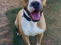 Brinkley is a sweet boy. He is super cute, playful and