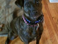 Brinkley is a petite 3 year old pitty mix female