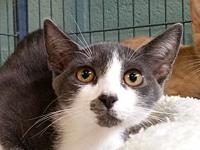 Brio's story I was a stray and brought to Cat Depot
