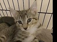Bristol's story Spirited, playful young kitten. Bristol