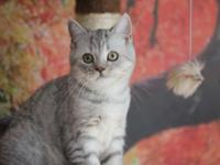 We have very nice kitten girl 4 month old, very sweet,
