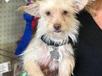 Britta's story Britta is a sweet 1 year old terrier mix