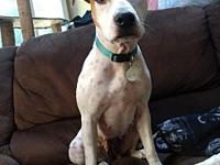 Brittany $325's story She is super sweet, affectionate,