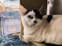 Brittany was surrendered to PALS because her elderly