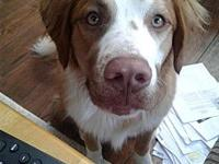 BRODY's story Meet Brody, this handsome pup about is