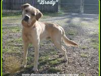 1803056 - Brody - young mixed breed approx 8 mos