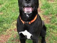 Brody's story Name: Breed: Age: Good with Kids: Good
