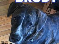 Brody's story Sweet, young, great with kids Brody is a