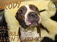 Brody's story You can fill out an adoption application